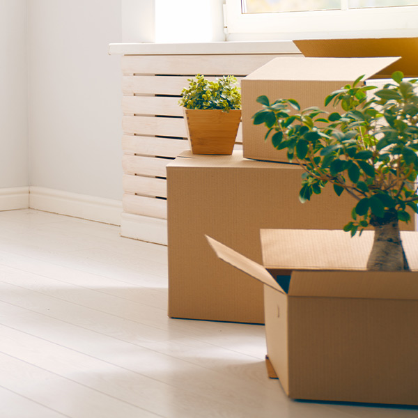 Moving Boxes   We Organize Florida - Professional Home, Office, and Retail Organizers in Southwest Florida